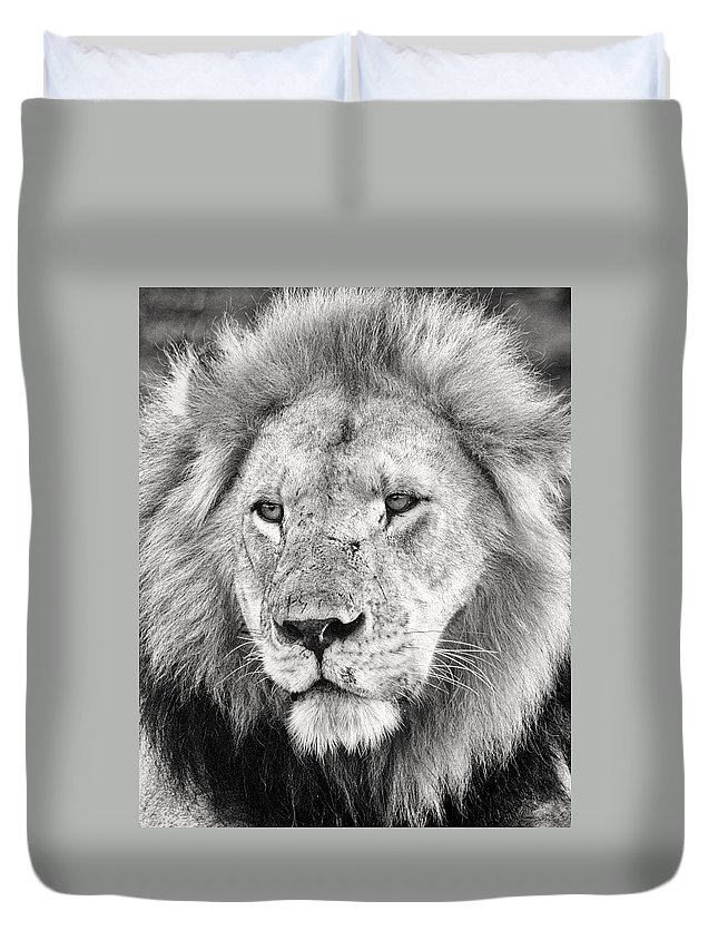 3scape Duvet Cover featuring the photograph Lion King by Adam Romanowicz