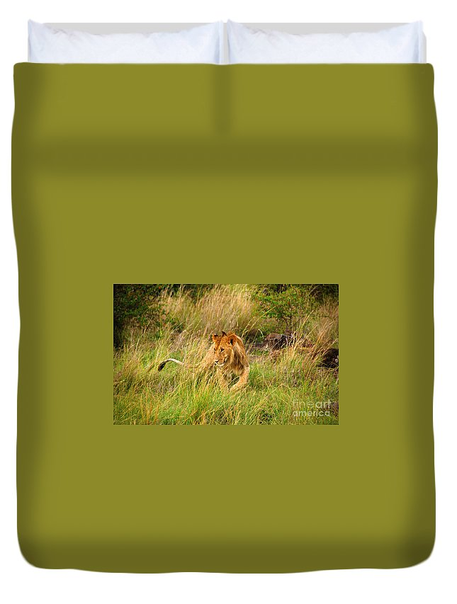 Lion Duvet Cover featuring the photograph Lion Masai Mara by Charuhas Images