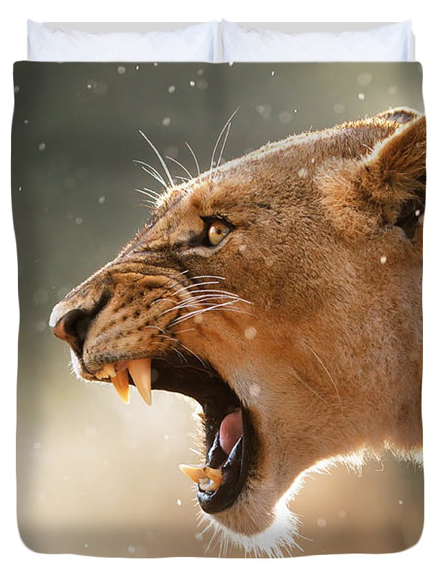 Lion Duvet Cover featuring the photograph Lioness Displaying Dangerous Teeth In A Rainstorm by Johan Swanepoel