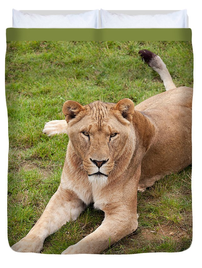 Lioness Duvet Cover featuring the photograph Lioness Sitting In Grass by Gillian Dernie