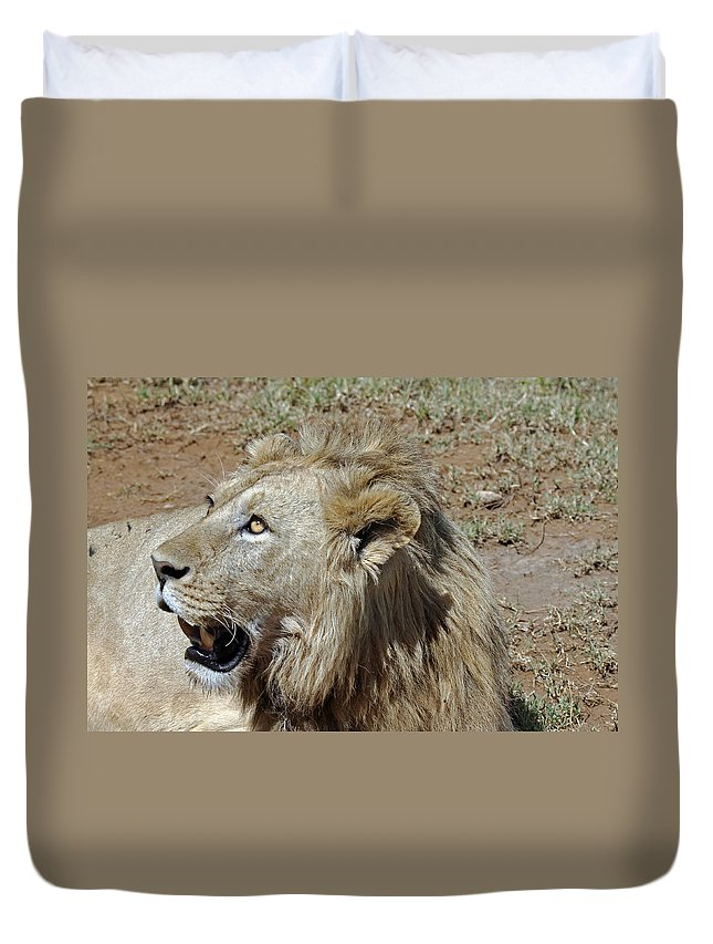 Animals Duvet Cover featuring the photograph Lions Head by Tony Murtagh