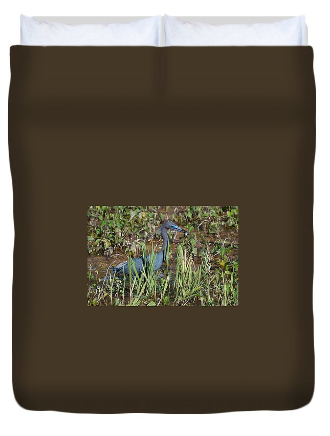 Little Duvet Cover featuring the photograph Little Blue Heron 3 by Photos By Cassandra