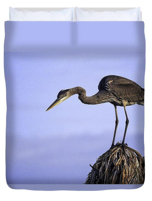 Bird Duvet Cover featuring the photograph Little Blue Heron by Fran Gallogly