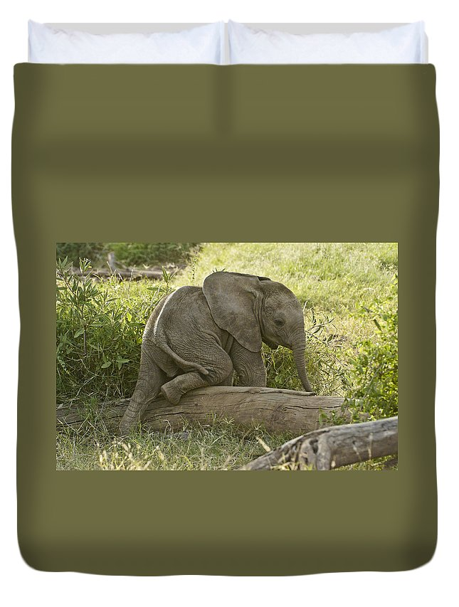 Africa Duvet Cover featuring the photograph Little Elephant Big Log by Michele Burgess