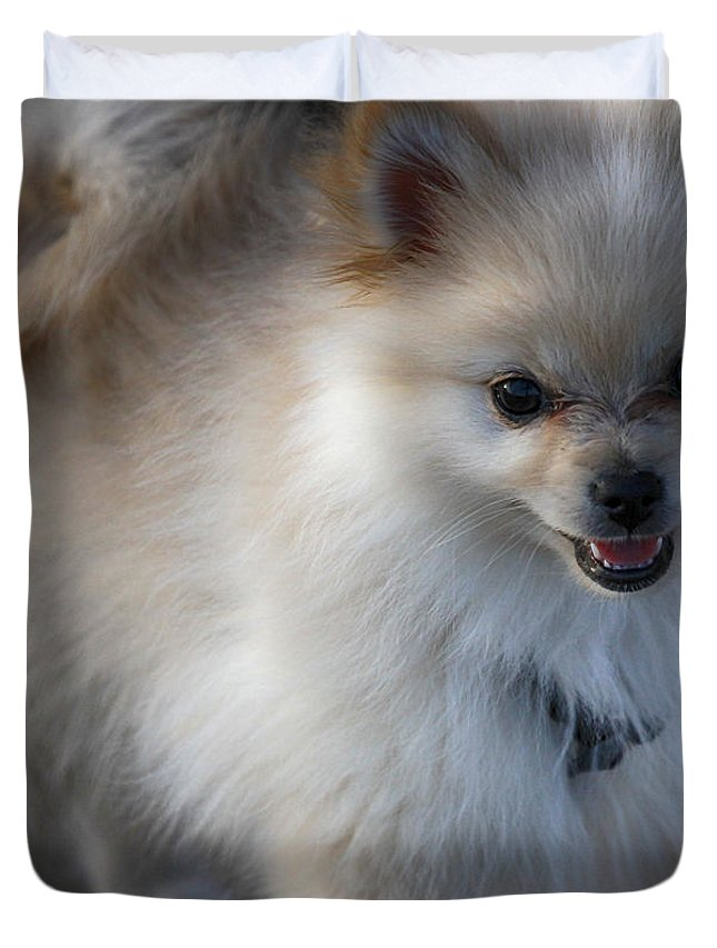 Dog Duvet Cover featuring the photograph Little Fluff Ball by Douglas Barnard