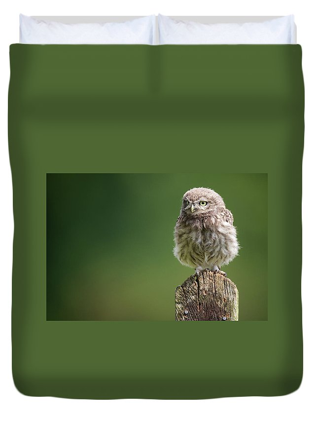 Owlet Duvet Cover featuring the photograph Little Fuzzy by Markbridger