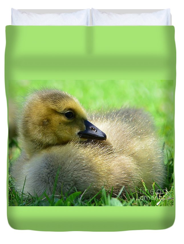 Goose Duvet Cover featuring the photograph Little One by Kathleen Struckle
