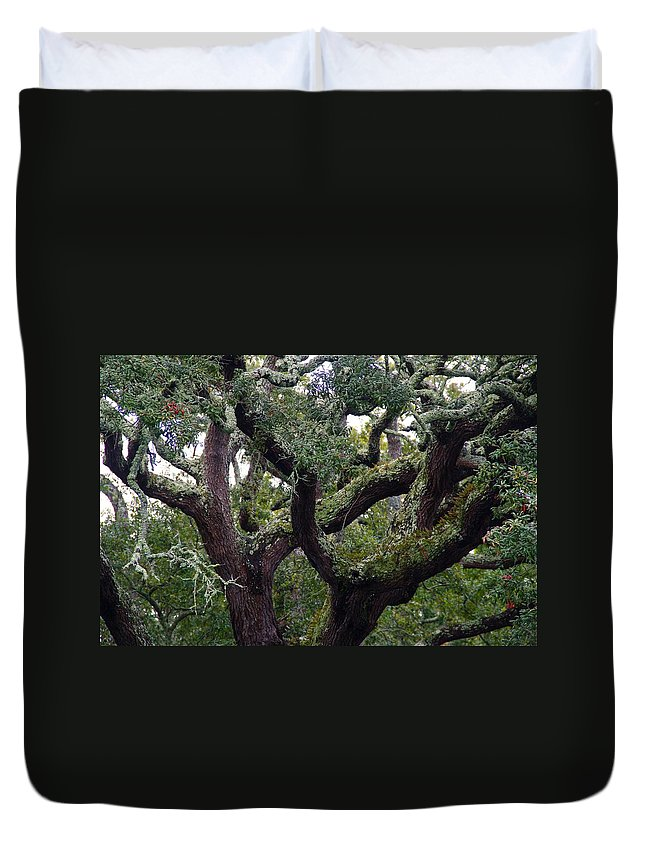 Tree Duvet Cover featuring the photograph Live Oak Tree by Kathryn Meyer