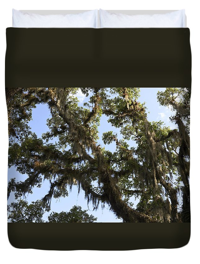Live Oak Tree Duvet Cover featuring the photograph Live Oak Tree With Moss by Sally Weigand