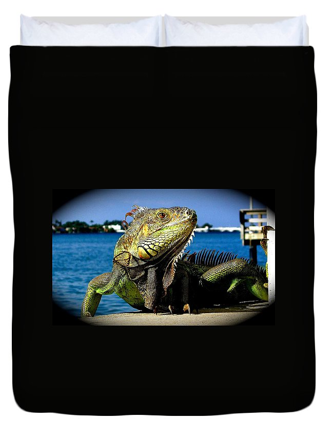 Lizard Print Duvet Cover featuring the photograph Lizard Sunbathing In Miami by Monique's Fine Art