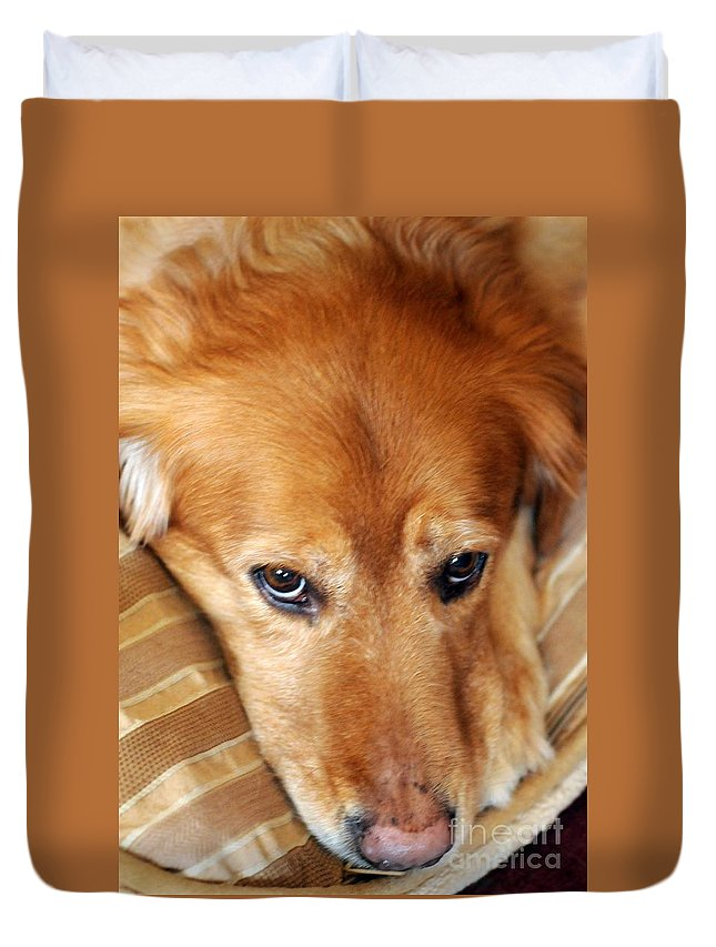 Dog Duvet Cover featuring the photograph Lizzy Golden Retriever by Kathleen Struckle