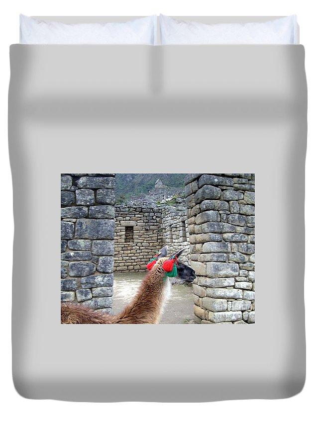 Machu Picchu Duvet Cover featuring the photograph Llama Touring Machu Picchu by Barbie Corbett-Newmin