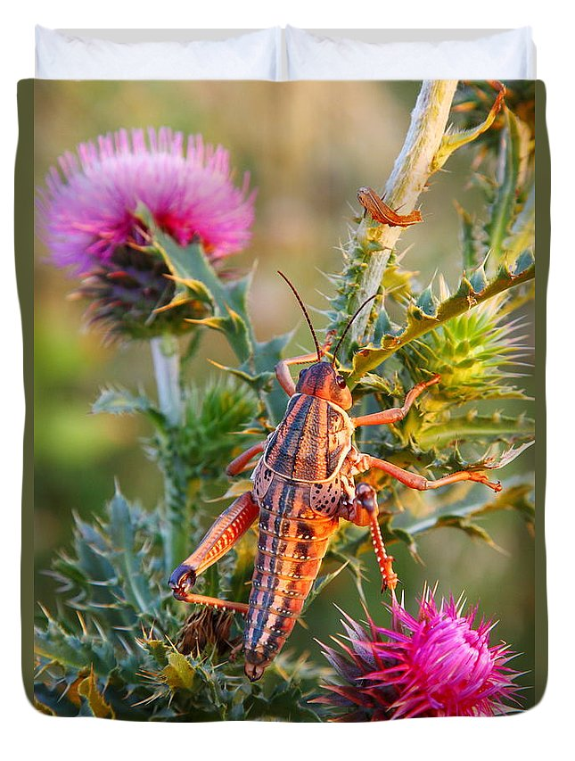 Locust Duvet Cover featuring the photograph Locust And Thistle 2am-110423 by Andrew McInnes