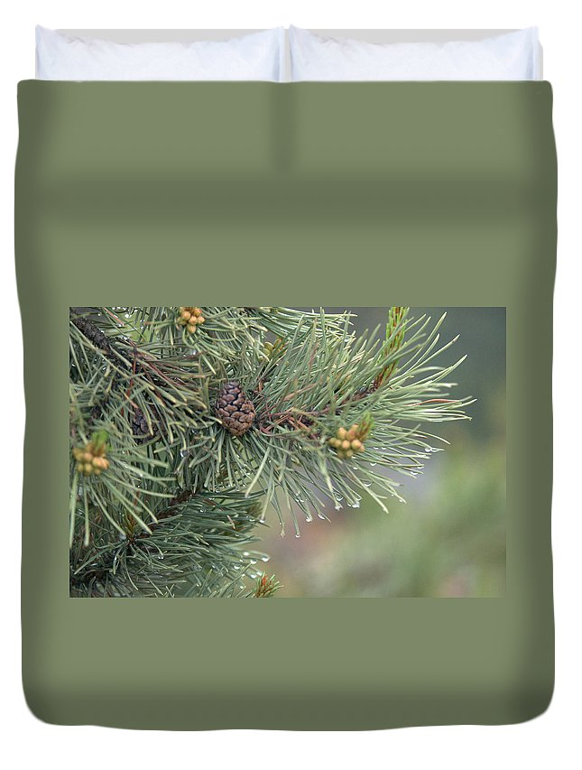 Pine Duvet Cover featuring the photograph Lodge Pole Pine In The Fog by Frank Madia