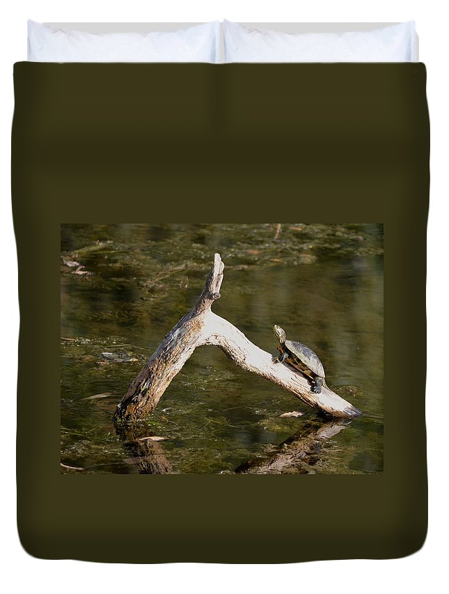 New York Duvet Cover featuring the photograph Log Climbing Turtle by Richard Bryce and Family