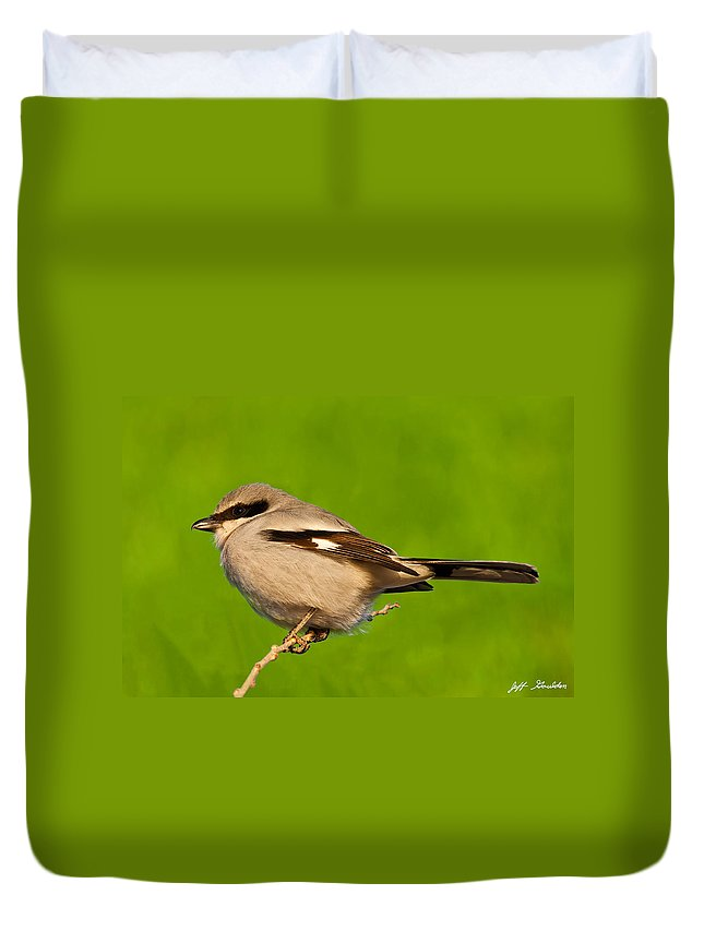Animal Duvet Cover featuring the photograph Loggerhead Shrike by Jeff Goulden