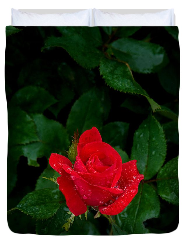 Flower Duvet Cover featuring the photograph Lonely Rose by Benjamin Reed