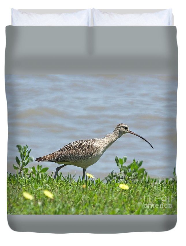 Bird Duvet Cover featuring the photograph Long Billed Curlew At Palacios Bay Tx by Lizi Beard-Ward
