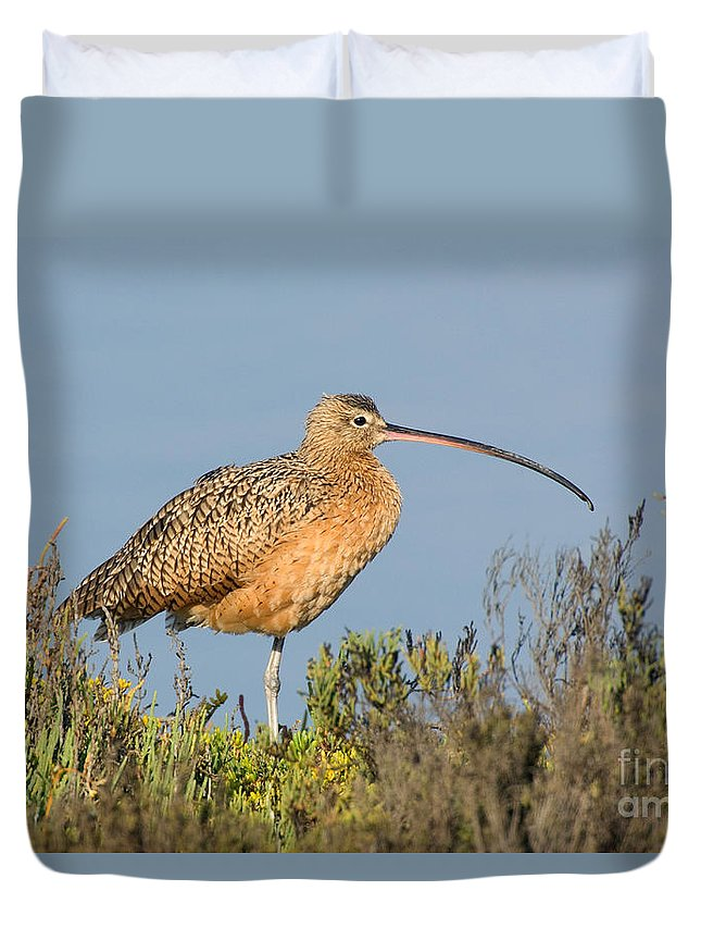 Fauna Duvet Cover featuring the photograph Long-billed Curlew Numenius Americanus by Anthony Mercieca