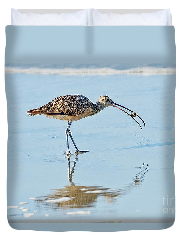 North American Duvet Cover featuring the photograph Long-billed Curlew With Crab by Anthony Mercieca