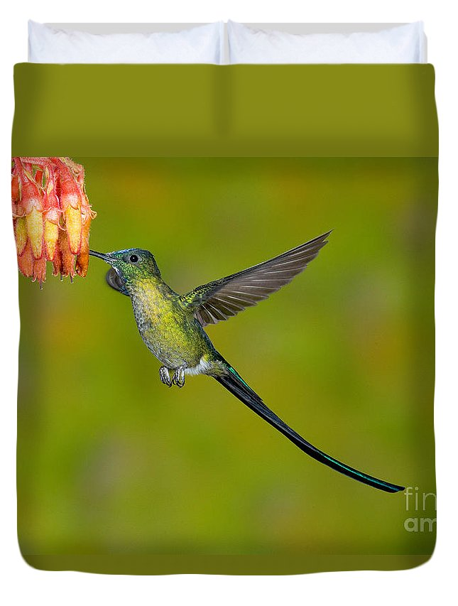 Fauna Duvet Cover featuring the photograph Long-tailed Sylph by Anthony Mercieca