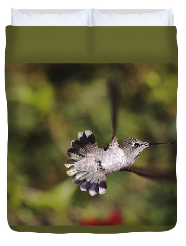 anna's Hummingbird Duvet Cover featuring the photograph Look At Meeeeee by Mike Herdering