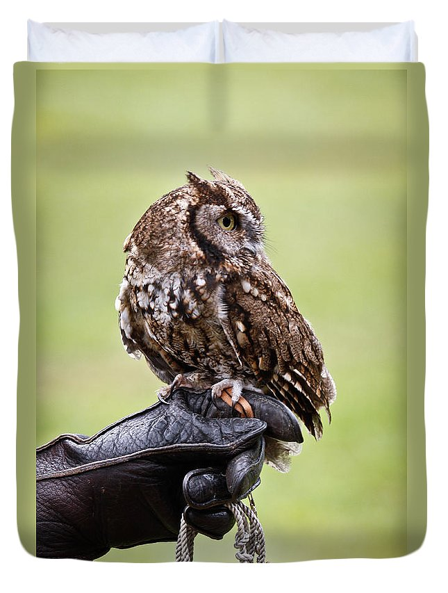 Screech Owl Duvet Cover featuring the photograph Look Hoo by Steve McKinzie