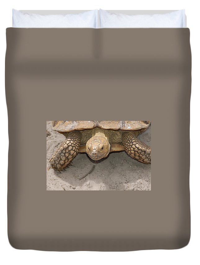 Turtle Duvet Cover featuring the photograph Look Out Here I Come by Aimee L Maher ALM GALLERY