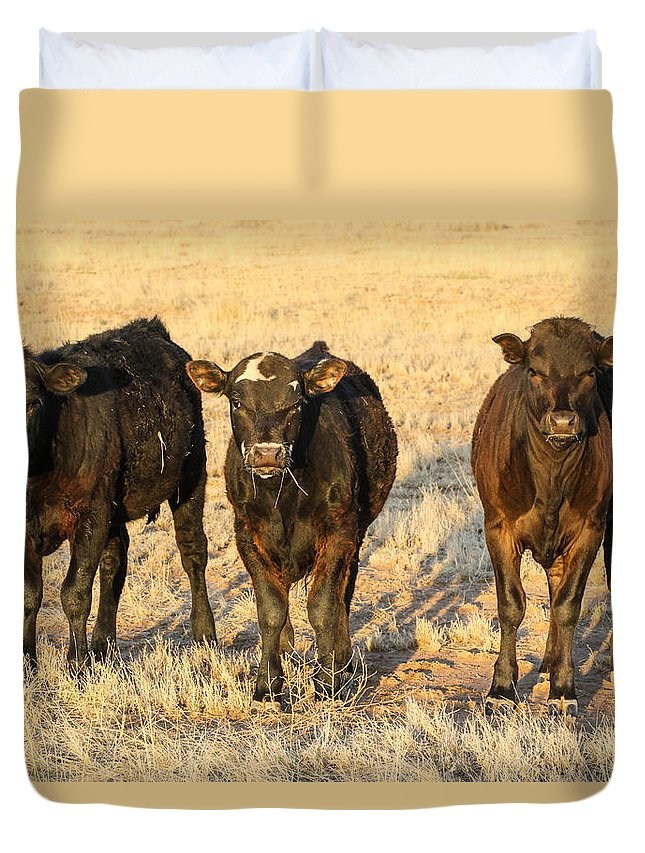 Cow Duvet Cover featuring the photograph Looking For Trouble 5-3-2014 by Renny Spencer