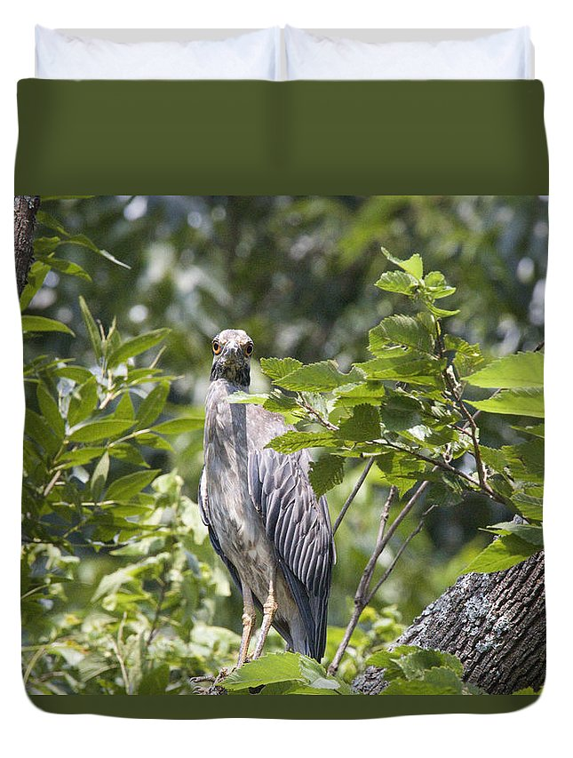 Great Blue Heron Photographs Duvet Cover featuring the photograph Looking Right At You by Vernis Maxwell
