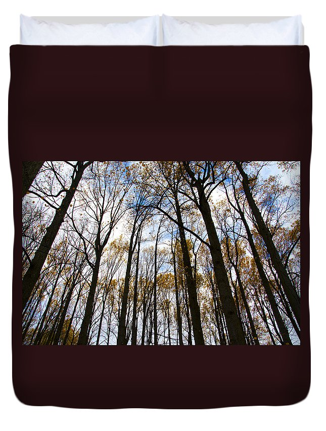 Looking Duvet Cover featuring the photograph Looking Skyward Into Autumn Trees by Bill Cannon