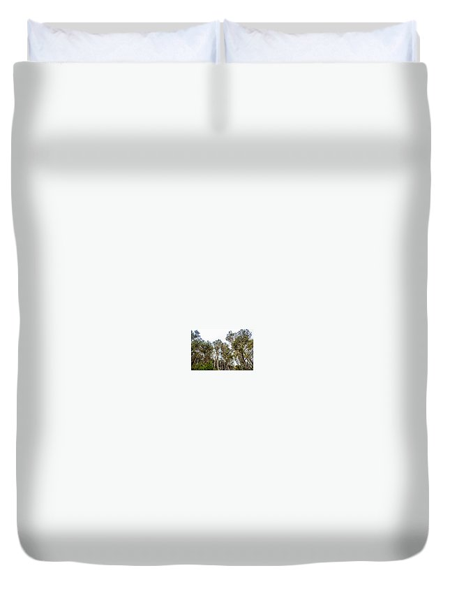 Doves Duvet Cover featuring the photograph Looking Up For Once by Brian Williamson