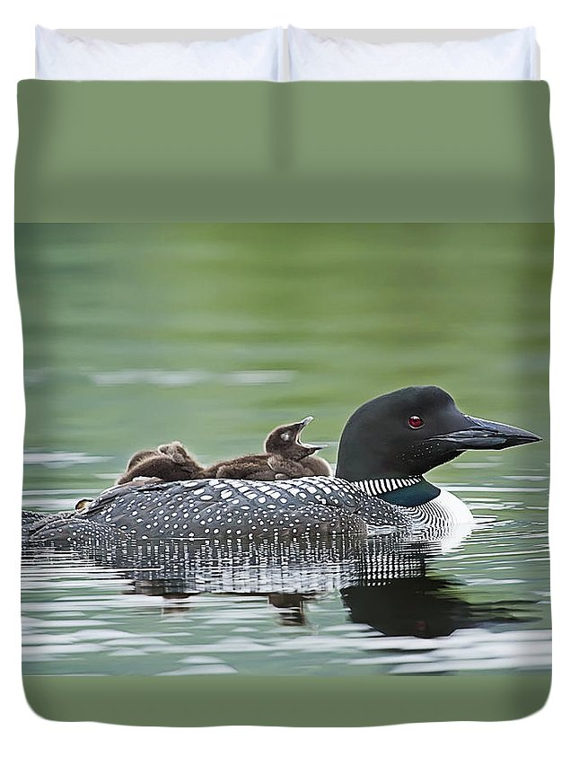 Common Loon Duvet Cover featuring the photograph Loon Chick - Big Yawn by John Vose