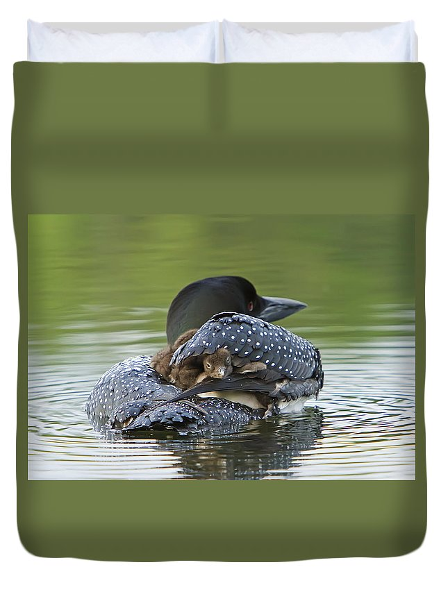 Common Loon Duvet Cover featuring the photograph Loon Chick - Peek A Boo by John Vose