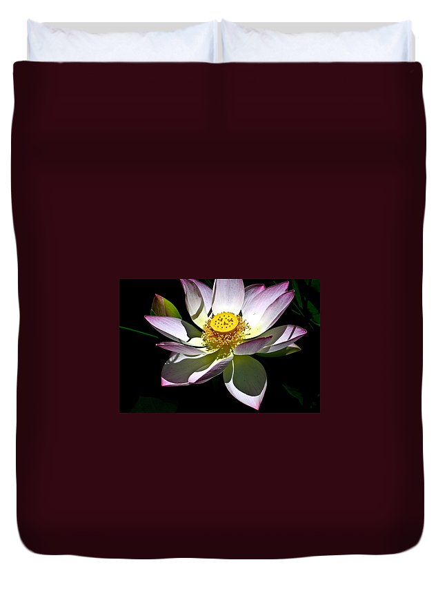 Lotus Duvet Cover featuring the photograph Lotus Of The Night by Douglas Barnett