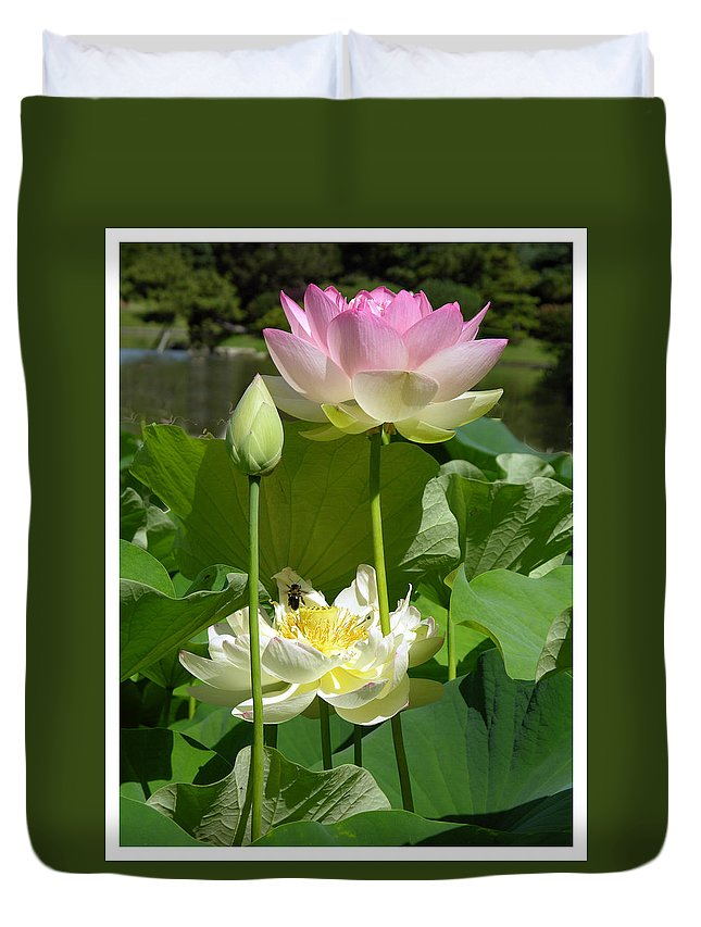 Lotus Duvet Cover featuring the photograph Lotuses in Bloom by John Lautermilch