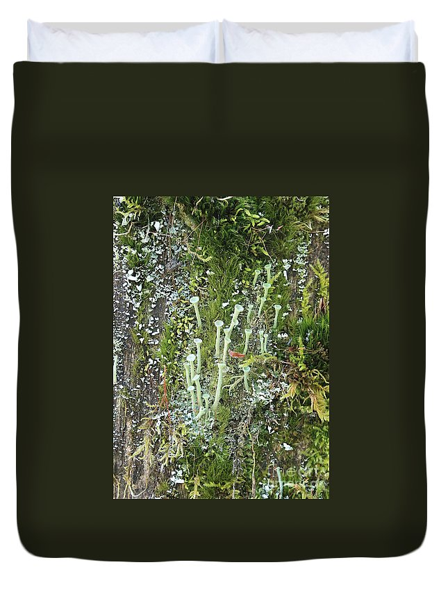 Lichens Duvet Cover featuring the photograph Lovely Lichens by Carol Groenen
