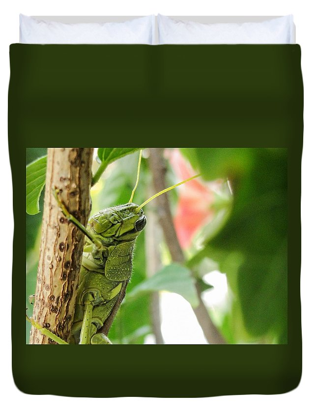 Lubber Grasshopper Duvet Cover featuring the photograph Lubber Grasshopper by TK Goforth