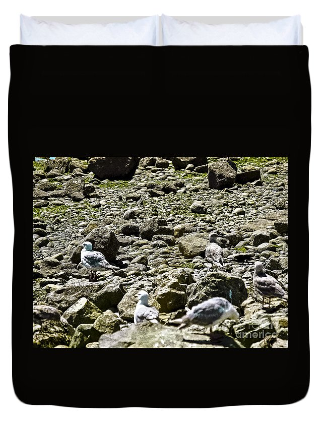 Beach Duvet Cover featuring the photograph Lunch With The Gulls by David Fabian
