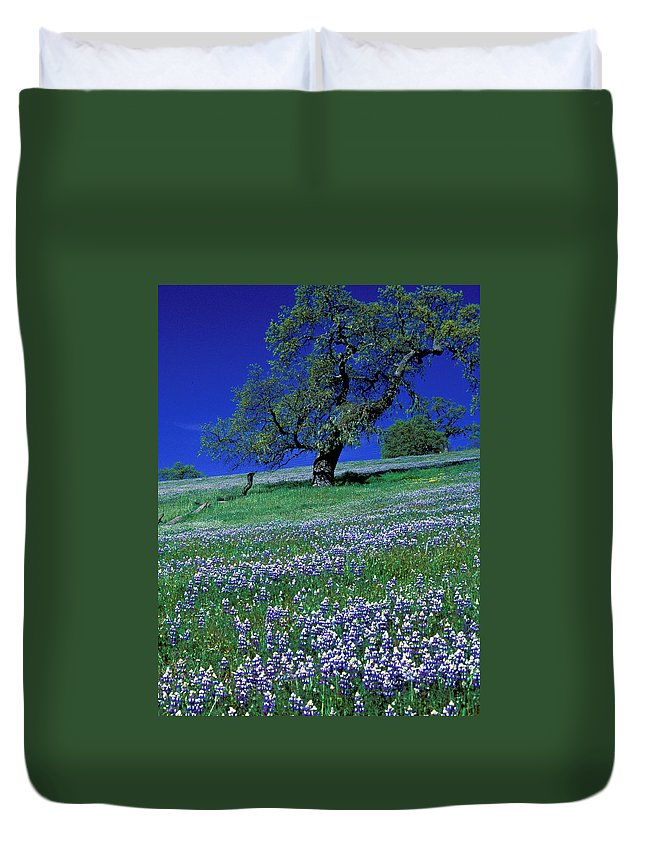 Flowers Duvet Cover featuring the photograph Lupine And The Leaning Tree by Kathy Yates