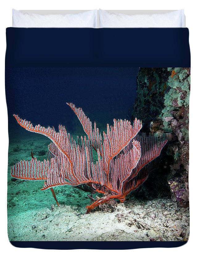 Underwater Duvet Cover featuring the photograph Lyre Gorgonian, Harp Coral by Gerard Soury