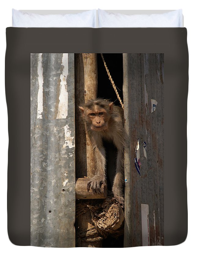 Animals Duvet Cover featuring the digital art Macaque Peeking Out by Carol Ailles