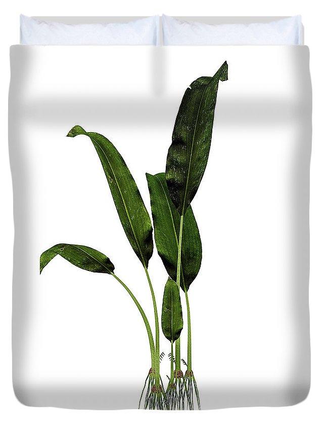 Macrotaeniopteris Duvet Cover featuring the photograph Macrotaeniopteris Prehistoric Plant by Elena Duvernay
