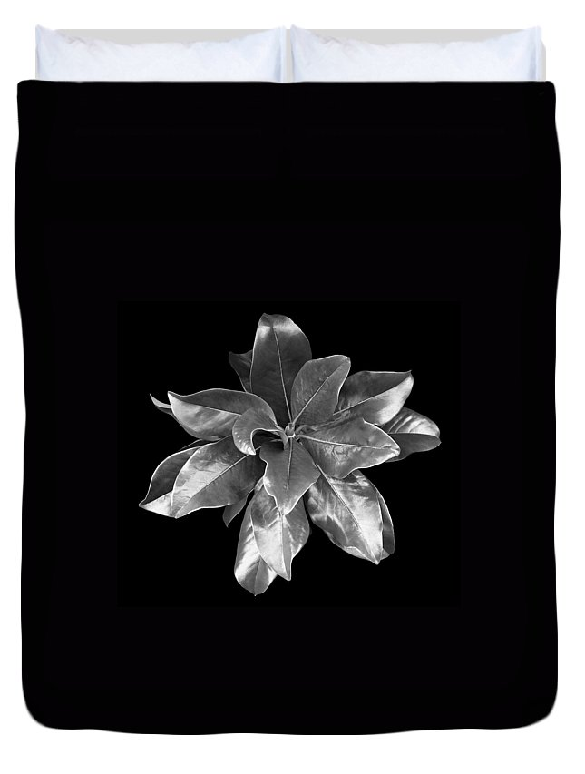 Magnolia Duvet Cover featuring the photograph Magnolia Tree Leaves by Marilyn Hunt