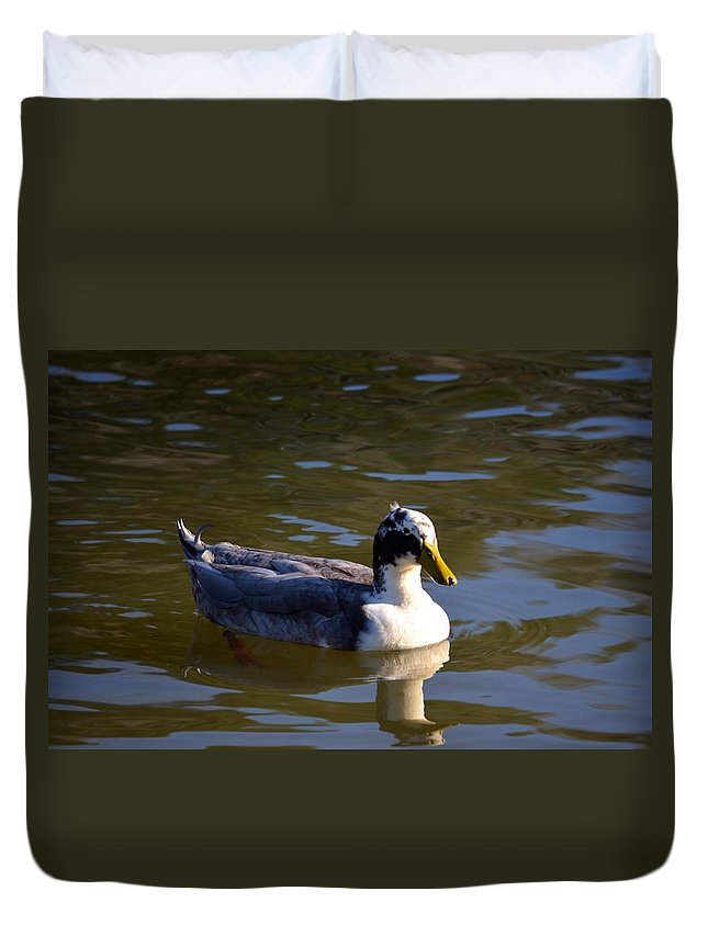 Magpie Duck Duvet Cover featuring the photograph Magpie Duck by Maria Urso