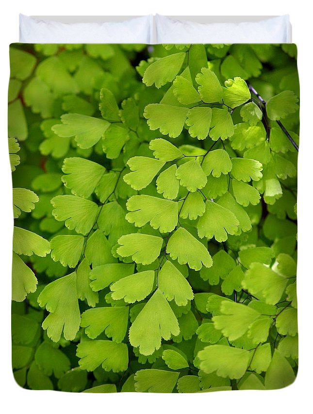 Fern Duvet Cover featuring the photograph Maidenhair Fern by Art Block Collections