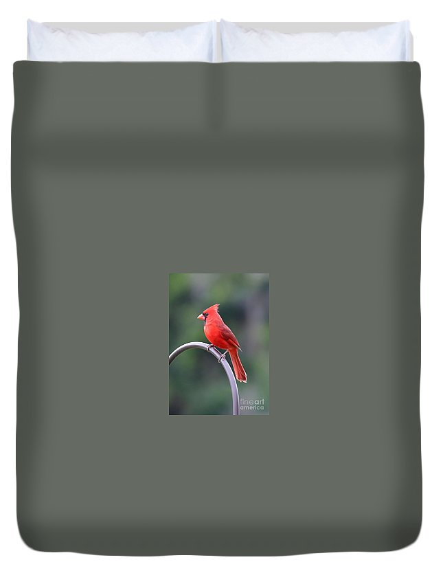 Cardinal Duvet Cover featuring the photograph Majestic Cardinal by Carol Groenen