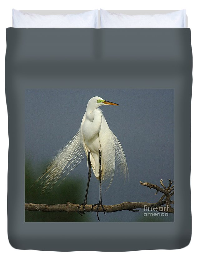 Majestic Great Egret Duvet Cover featuring the photograph Majestic Great Egret by Bob Christopher