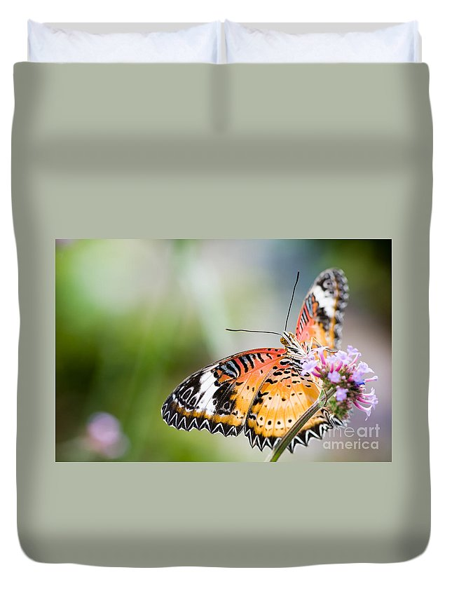 Color Duvet Cover featuring the photograph Malay Lacewing Butterfly by Oscar Gutierrez