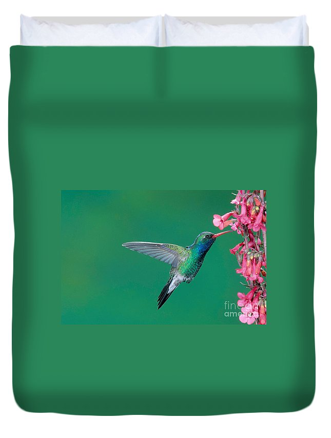 Fauna Duvet Cover featuring the photograph Male Broadbill Hummingbird Hovering by Anthony Mercieca